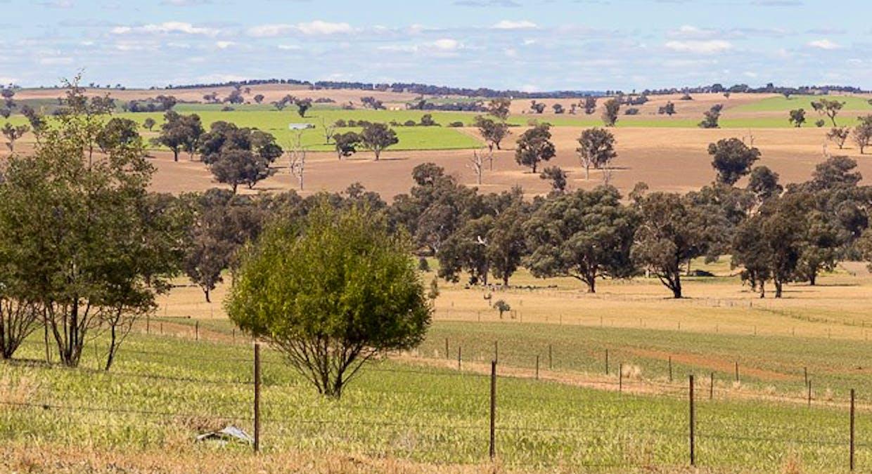 1228 Jerrybang Lane, Monteagle Via, Young, NSW, 2594 - Image 19