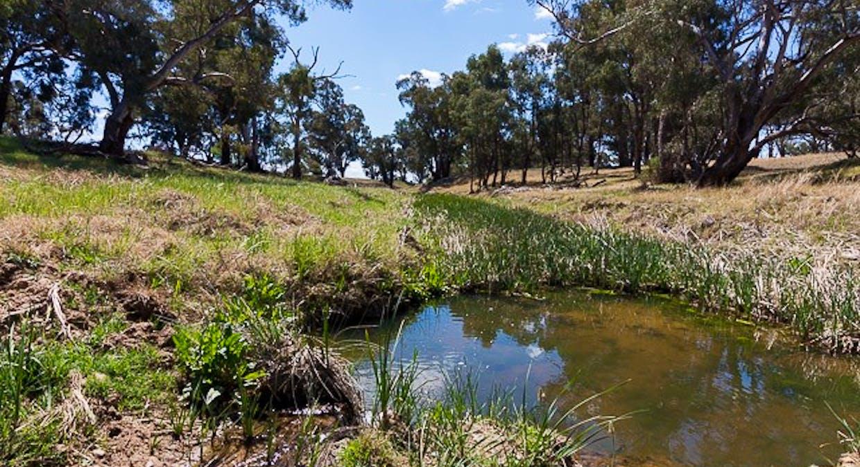 1228 Jerrybang Lane, Monteagle Via, Young, NSW, 2594 - Image 16