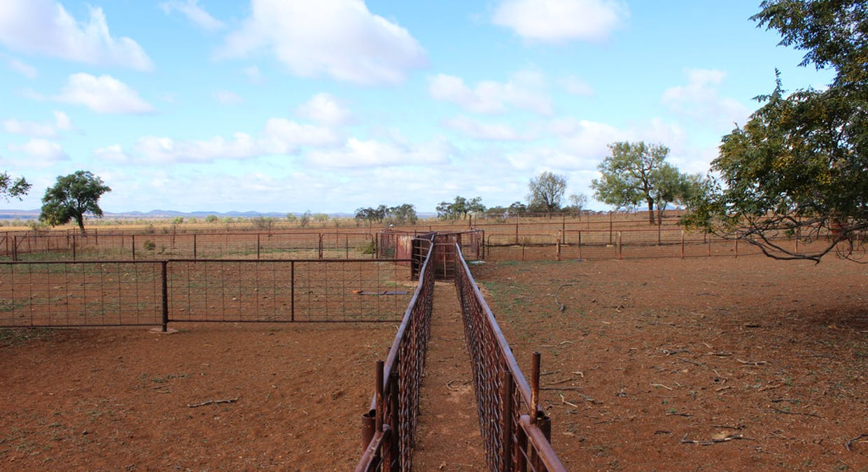 2044 Grassmere Road, Condobolin, NSW, 2877 - Image 19