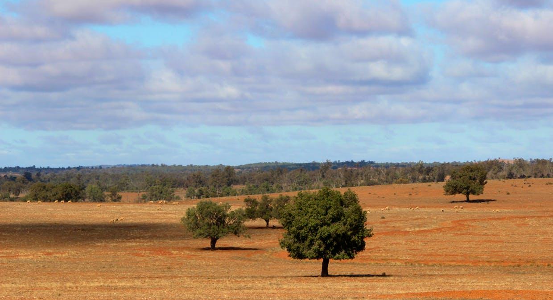 2044 Grassmere Road, Condobolin, NSW, 2877 - Image 14