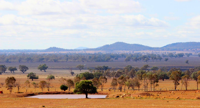 2044 Grassmere Road, Condobolin, NSW, 2877 - Image 8