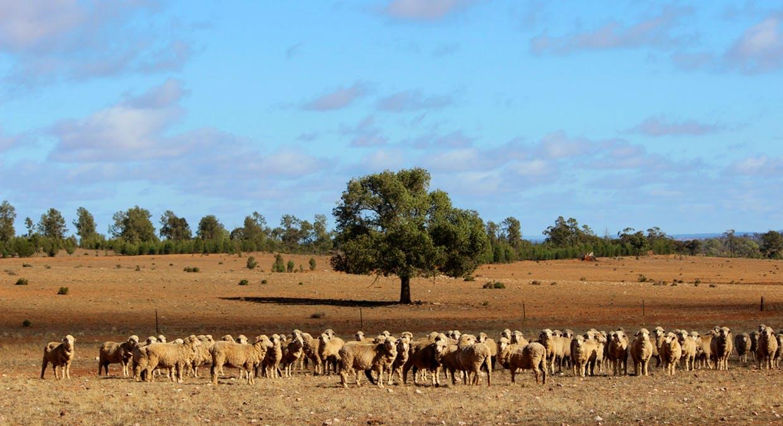 2044 Grassmere Road, Condobolin, NSW, 2877 - Image 1