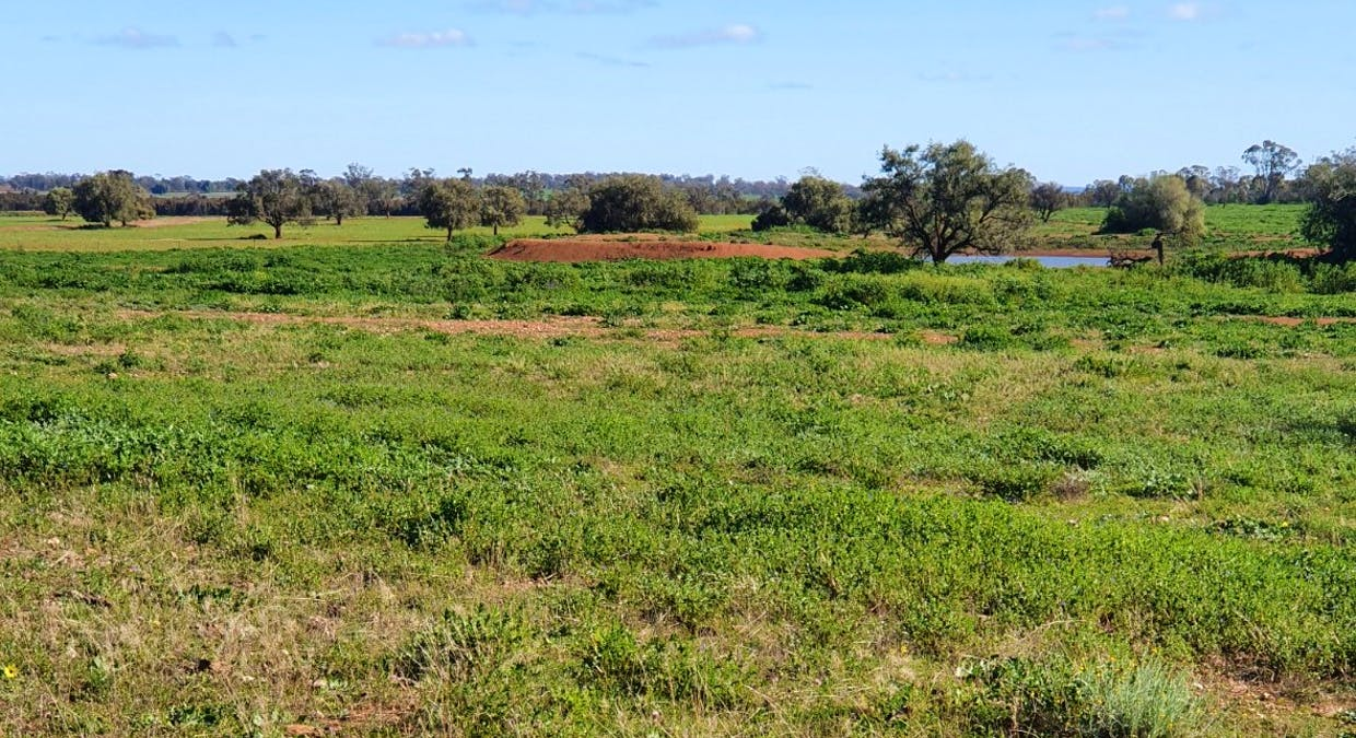 2044 Grassmere Road, Condobolin, NSW, 2877 - Image 7