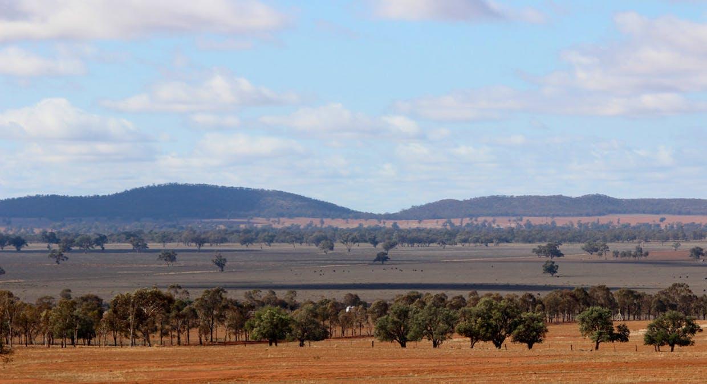 2044 Grassmere Road, Condobolin, NSW, 2877 - Image 6
