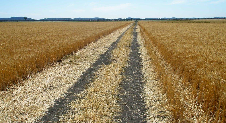 2044 Grassmere Road, Condobolin, NSW, 2877 - Image 4