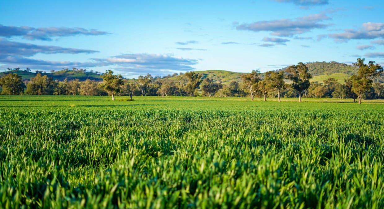 Goolma, NSW, 2852 - Image 2