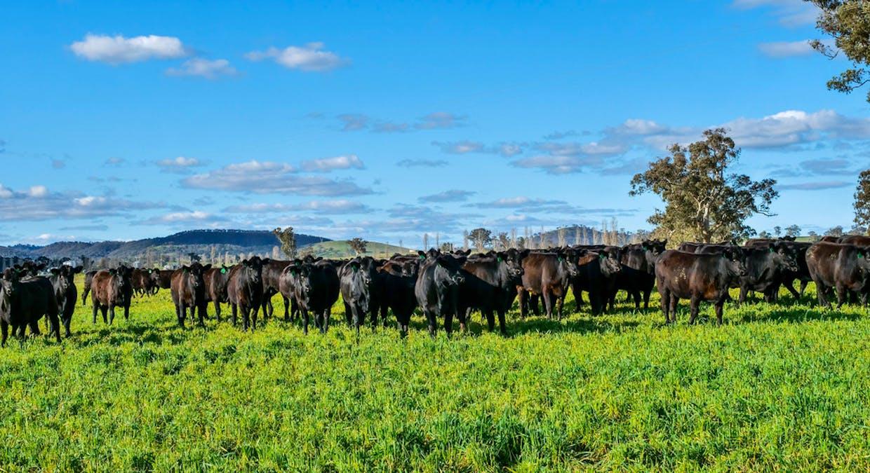 Goolma, NSW, 2852 - Image 4