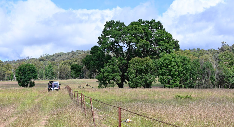 'Bunndarra And Towealgra' Digilah West Road, Dunedoo, NSW, 2844 - Image 4