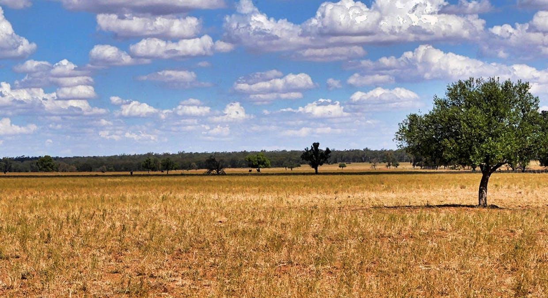 657 Curra Lane, Peak Hill, NSW, 2869 - Image 14