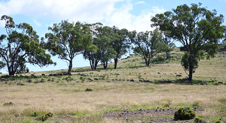 'Bunndarra And Towealgra' Digilah West Road, Dunedoo, NSW, 2844 - Image 17