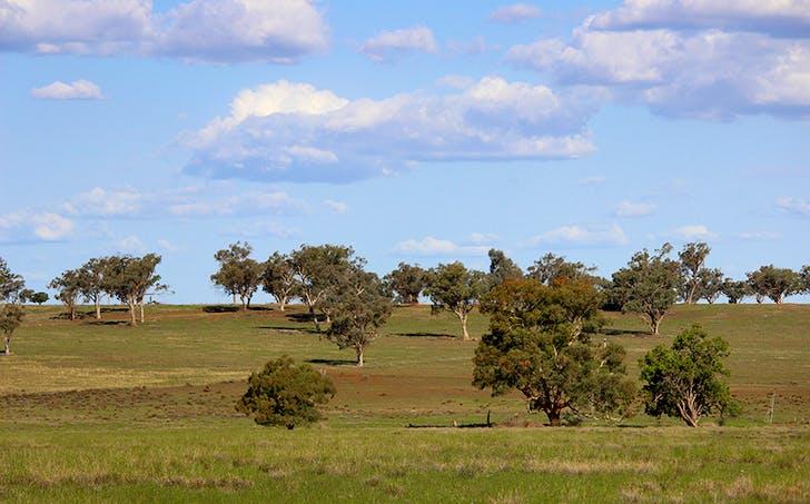 ' Springfield', Mendooran, NSW, 2842 - Image 1