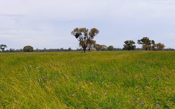 Condobolin, NSW, 2877 - Image 1