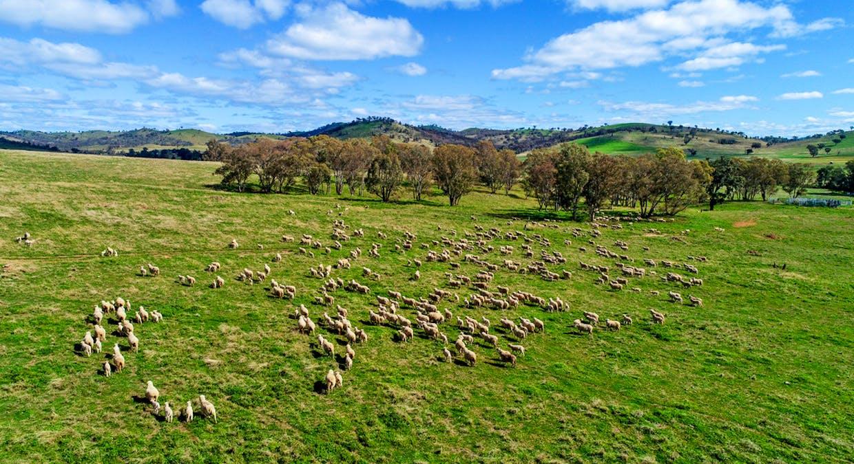 Goolma, NSW, 2852 - Image 17