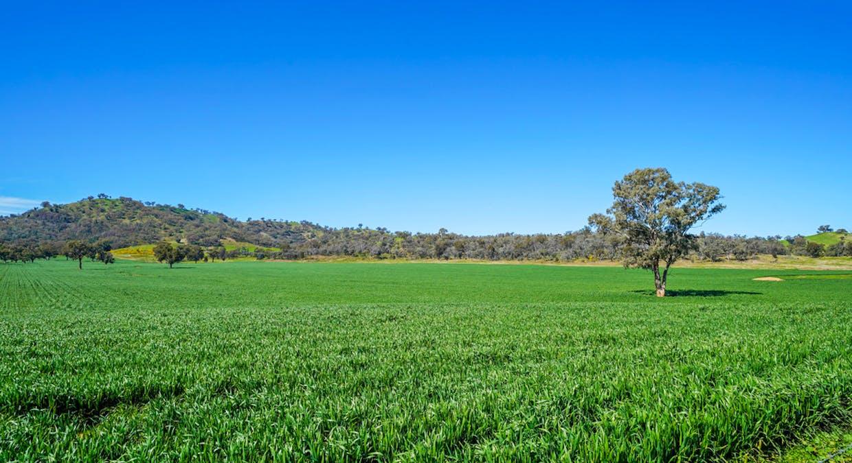 Goolma, NSW, 2852 - Image 23