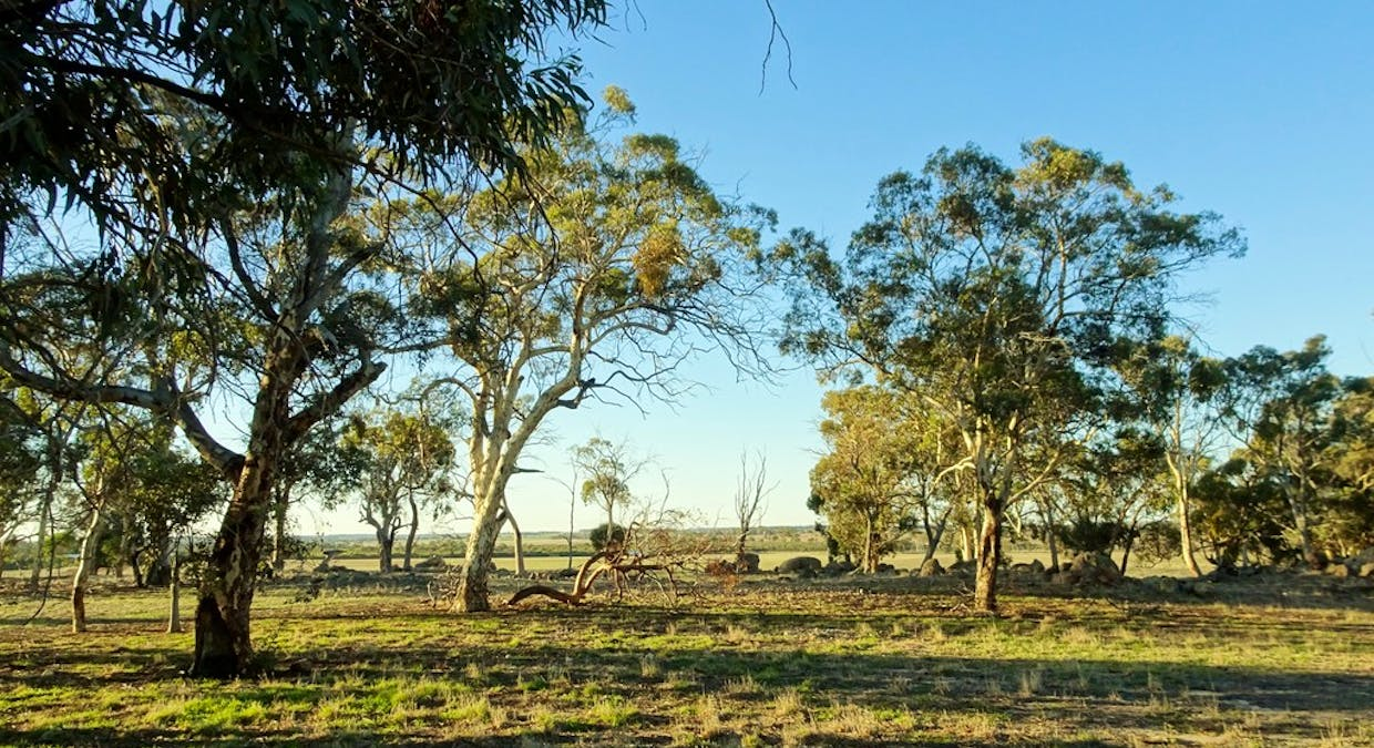 Lot 4395 Williams Kondinin Rd, Narrogin, WA, 6312 - Image 8