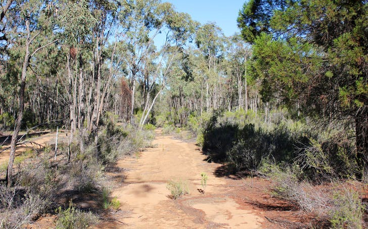353 Albert Wright Road, Rocky Glen, NSW, 2357 - Image 1