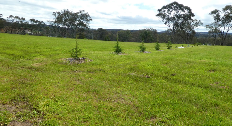 Lot 108 Queen Street, Molong, NSW, 2866 - Image 2