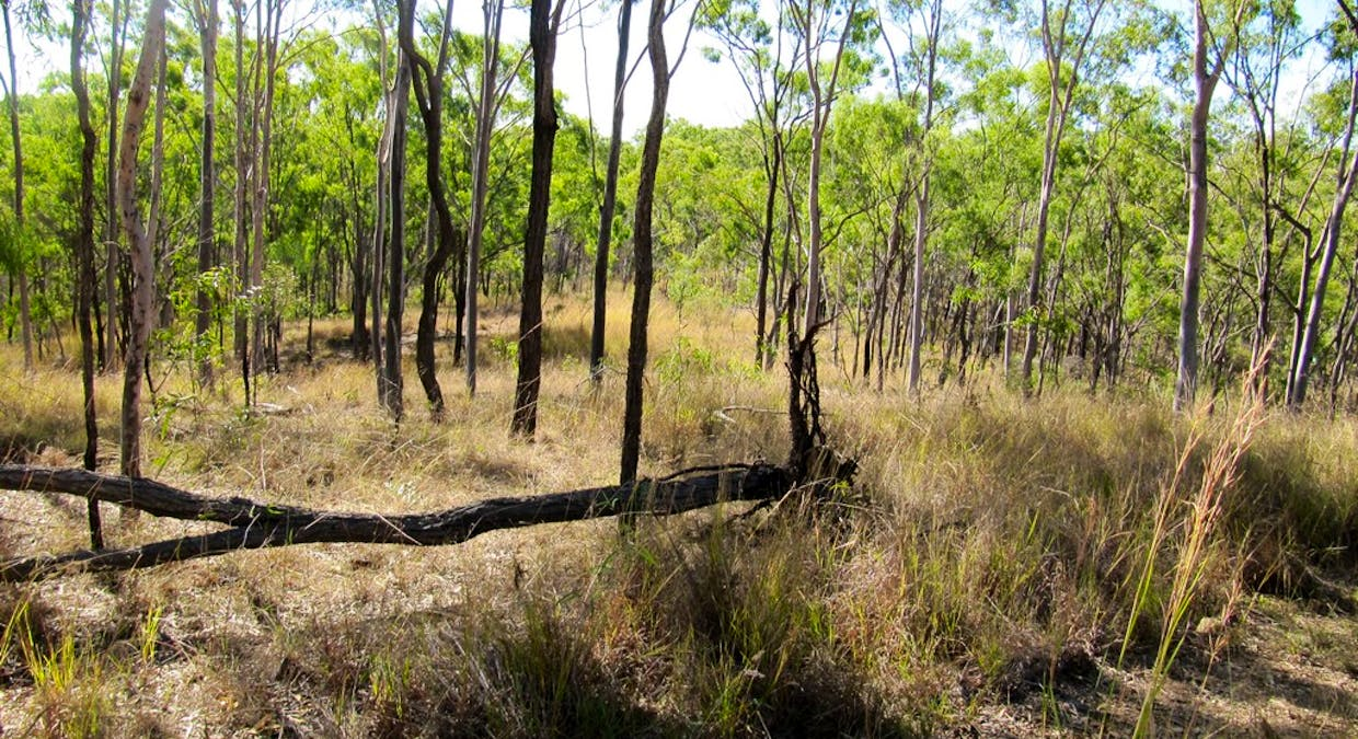 Lot 96 Booroo Rd., O'connell, QLD, 4680 - Image 5