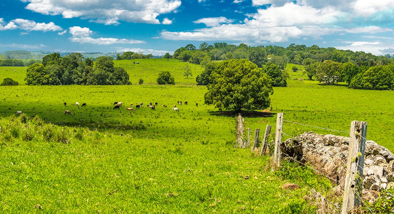 1545 Bangalow Road, Clunes, NSW, 2480 - Image 9