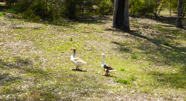 41 Risson Road, Grantham, QLD, 4347 - Image 16