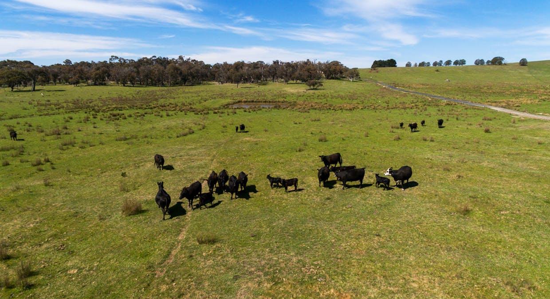 6131 Oberon Road, Taralga, NSW, 2580 - Image 3