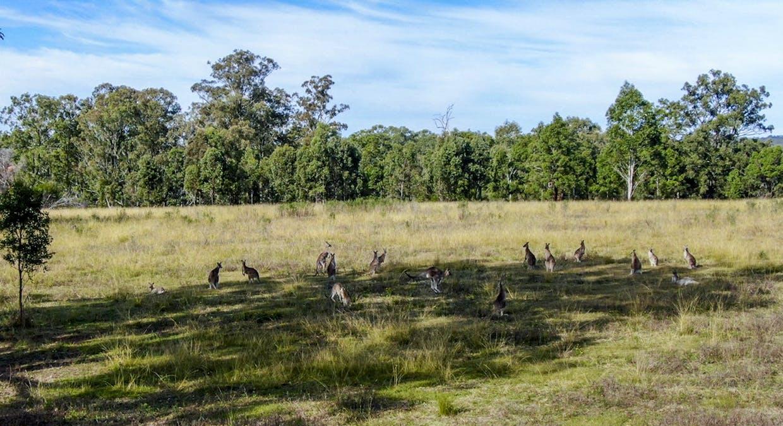 LOT 170 Kangaroo Creek Road, Coutts Crossing, NSW, 2460 - Image 5