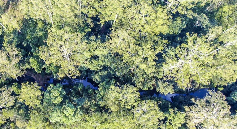 LOT 170 Kangaroo Creek Road, Coutts Crossing, NSW, 2460 - Image 3