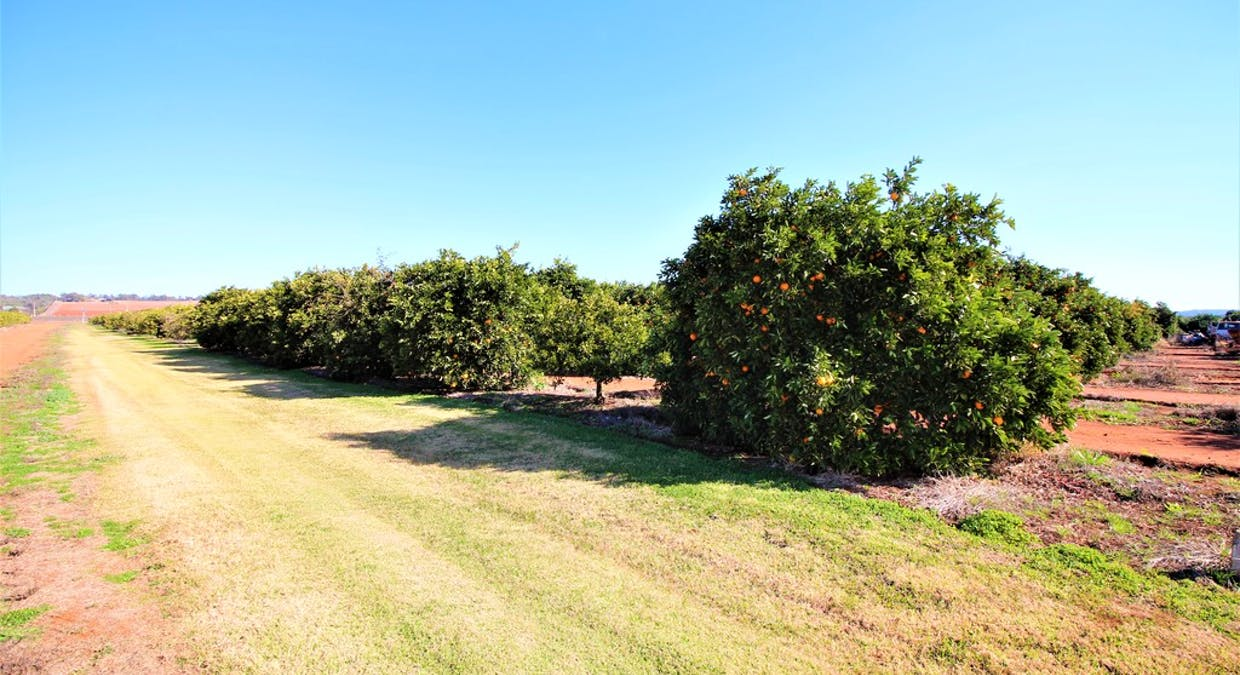 Farm 1823, Lot 2 Druitt Road, Griffith, NSW, 2680 - Image 2