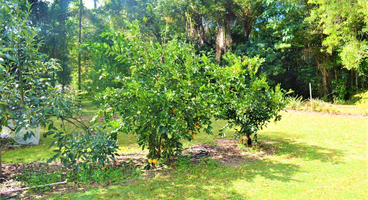 56 Paradise Palm Drive, Tully Heads, QLD, 4854 - Image 29
