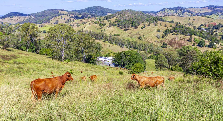 213 Coppermine Creek Road, Langshaw, QLD, 4570 - Image 18