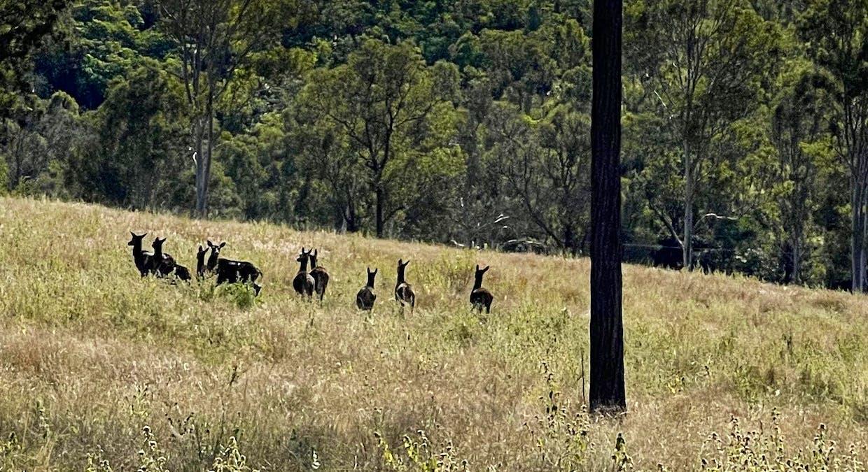 Woolooga, QLD, 4570 - Image 9