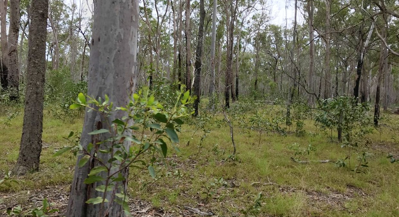 Lot 28 Peridge Road, Aldershot, QLD, 4650 - Image 23