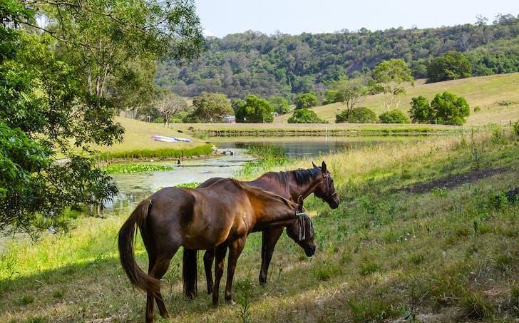 Albion Park, NSW, 2527 - Image 1