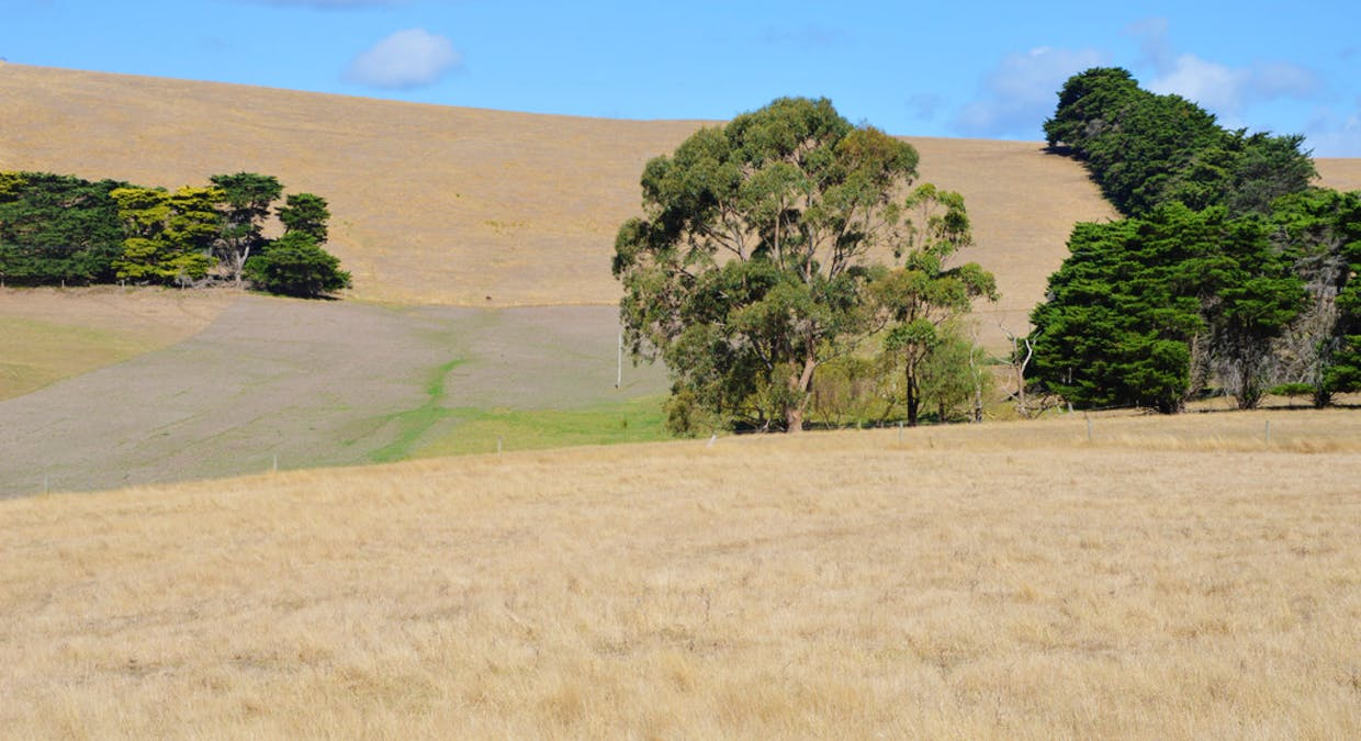 322 Buffalo-Stony Creek Road, Buffalo, VIC, 3958 - Image 14