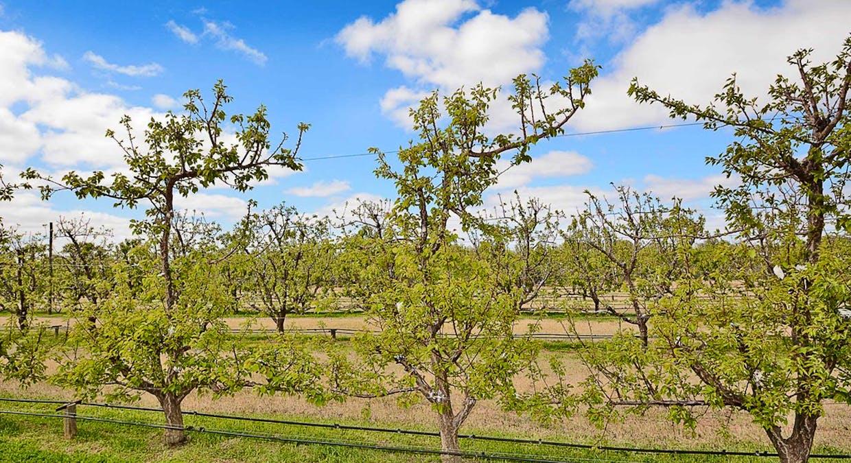 568 Pomona Road, Pomona, NSW, 2648 - Image 13