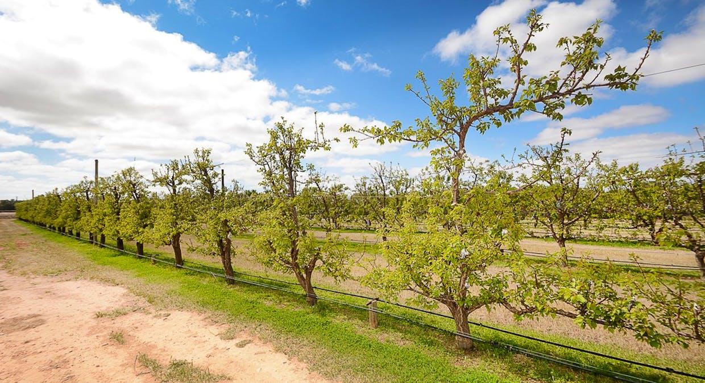 568 Pomona Road, Pomona, NSW, 2648 - Image 4