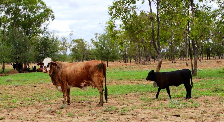Killarney, Augathella, QLD, 4477 - Image 26