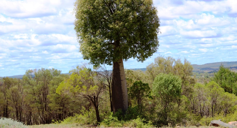 Killarney, Augathella, QLD, 4477 - Image 11