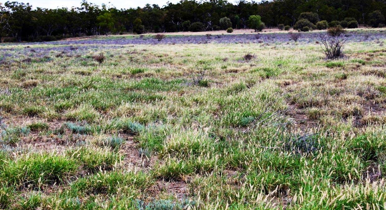 Killarney, Augathella, QLD, 4477 - Image 23