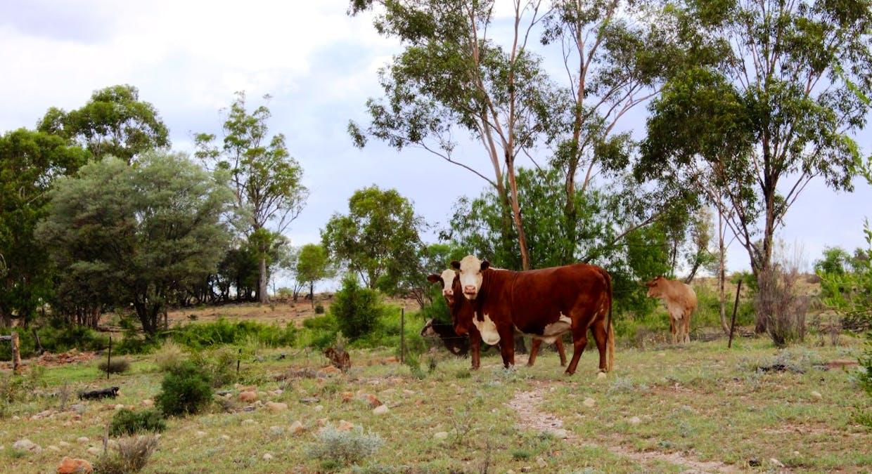 Killarney, Augathella, QLD, 4477 - Image 24