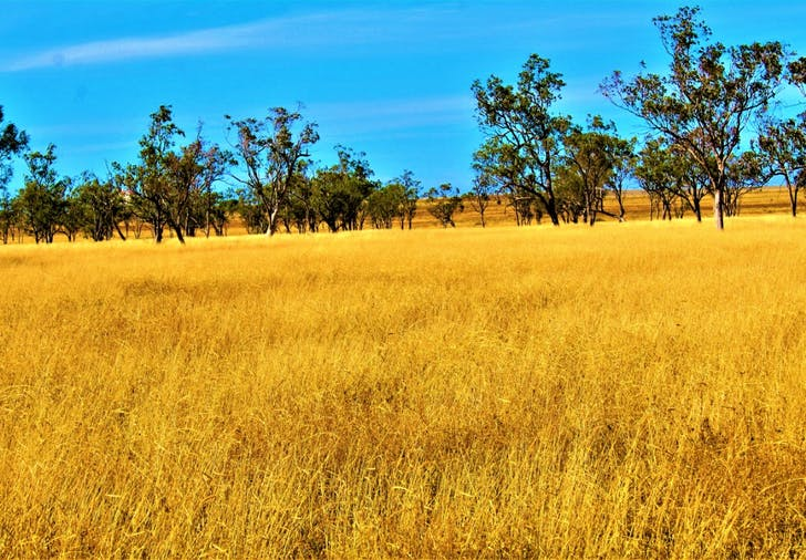 Plain Farm, Roma, QLD, 4455