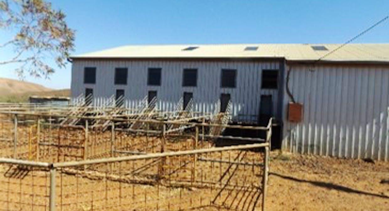 - Moolooloo Station, Moolooloo, SA, 5730 - Image 37
