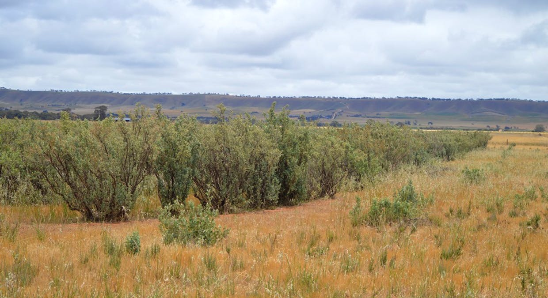 2547 Black Springs Road, Robertstown, SA, 5381 - Image 4