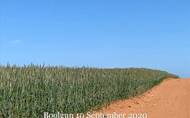 Boolgun, SA, 5330 - Image 1