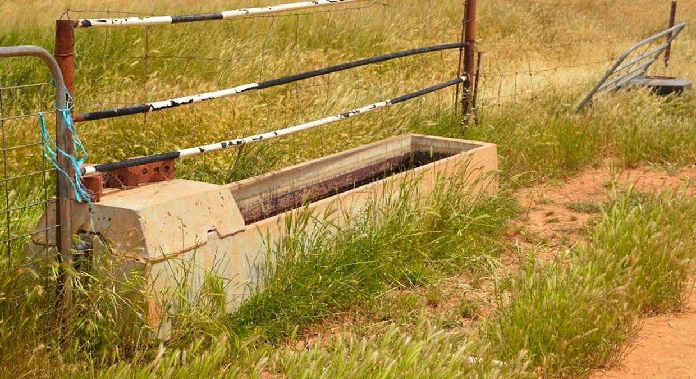 2547 Black Springs Road, Robertstown, SA, 5381 - Image 8