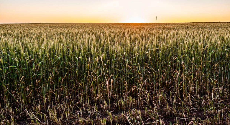 10018 Spencer Highway, Wallaroo Plain, SA, 5556 - Image 5