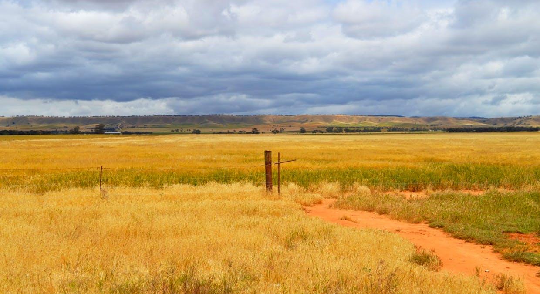 2547 Black Springs Road, Robertstown, SA, 5381 - Image 6