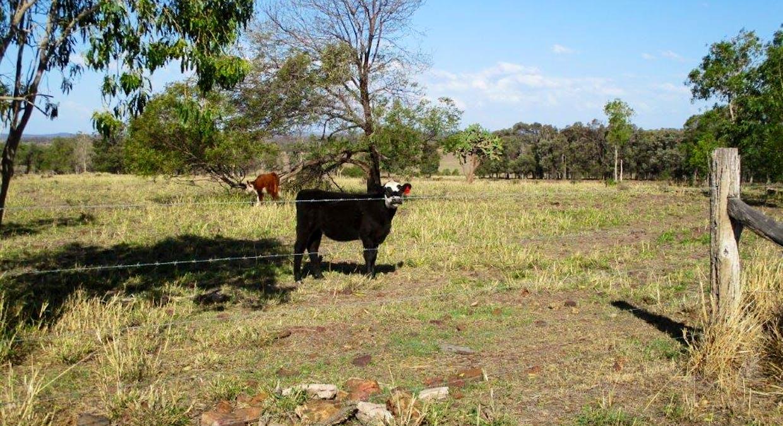 602 Acres Grazing, Jandowae, QLD, 4410 - Image 7