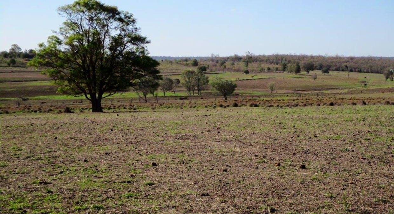 602 Acres Grazing, Jandowae, QLD, 4410 - Image 8