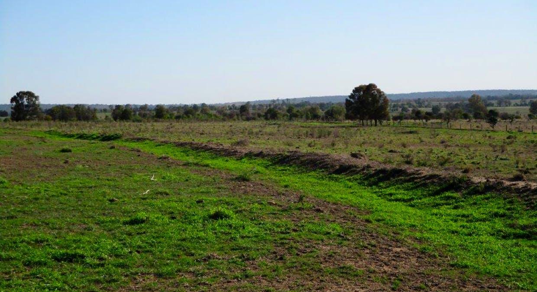 602 Acres Grazing, Jandowae, QLD, 4410 - Image 11